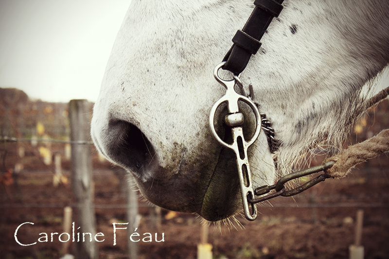 photographe cheval indre et loire CF Photographe