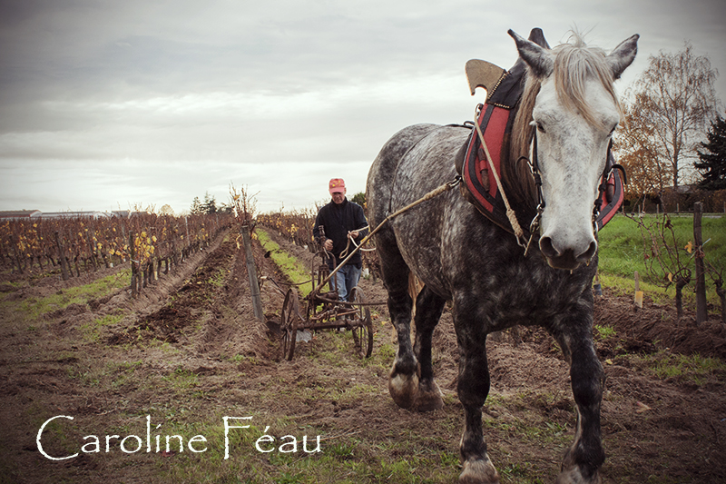 photographe chevaux 37 CF Photographe